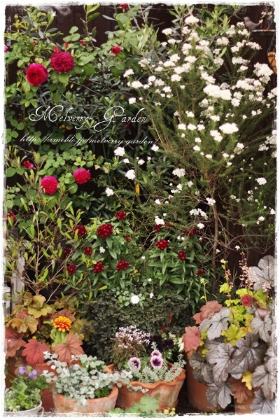 $Melverry-Garden~小さな庭とバラ物語~