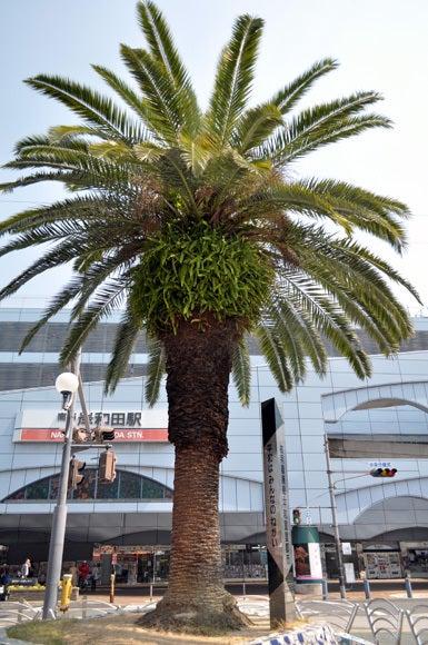 茶々吉とデジ一 のんびり旅-120518_岸和田駅前