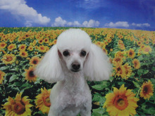~ DOG Salon Rui & Mary ~