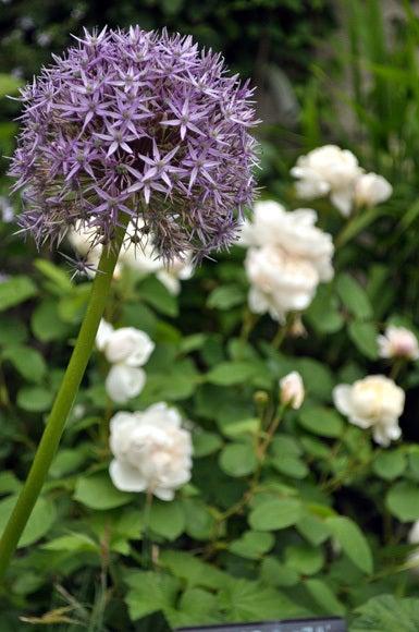 茶々吉とデジ一 のんびり旅-120521_ガーデンフィールズ課題3