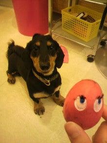 ASAMI's DOG LIFE-2012051219070000.jpg