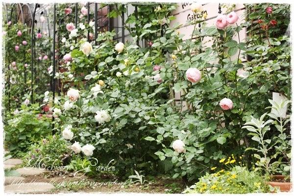 Melverry-Garden~小さな庭とバラ物語~
