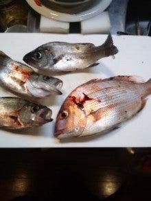 TOSA ROCKの『100魚種の旅2012』-120523_0039~01.jpg