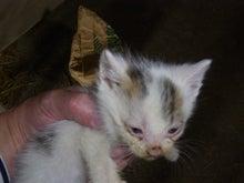 吉小路動物病院のブログ