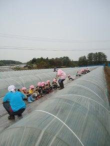 ☆大山農芸のトクラコスイカ☆