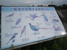熱帯魚クンのブログ
