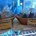 $earth cafe  vegan food&deli-石川さん3