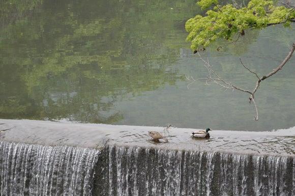 茶々吉とデジ一 のんびり旅-120525_鳥2
