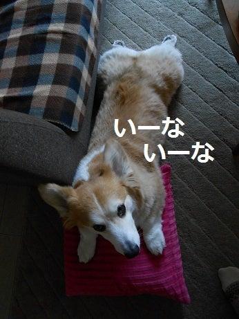 アラフォー夫婦と犬1匹☆東京練馬区ライフ!!