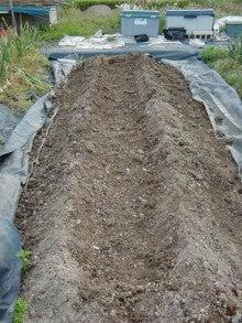耕作放棄地をショベルで畑に開拓!週2日家庭菜園有機野菜栽培の記録 byウッチー-120522ショウガの定植02