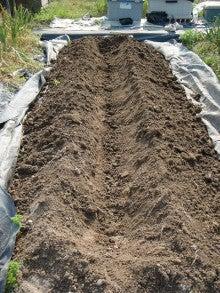 耕作放棄地をショベルで畑に開拓!週2日家庭菜園有機野菜栽培の記録 byウッチー-120522ショウガの定植01