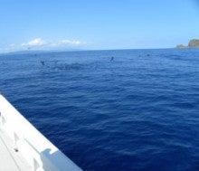 $西表島 マリンボックスの釣果ブログ