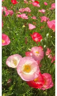 空と花と猫...-SH3J1572.jpg