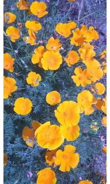 空と花と猫...-SH3J1566.jpg