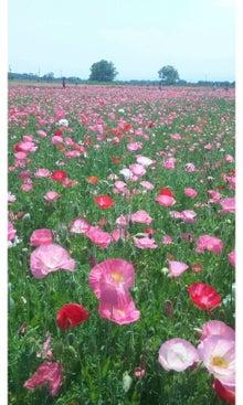 空と花と猫...-SH3J1573.jpg