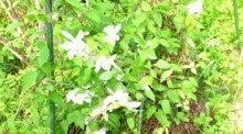 蔵王Little Gardenのブログ-DSC_1111.JPG