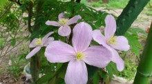 蔵王Little Gardenのブログ-DSC_1115.JPG