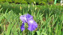 蔵王Little Gardenのブログ-DSC_1110.JPG