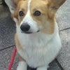 高崎市 安中市 犬のしつけ 合同訓練の画像