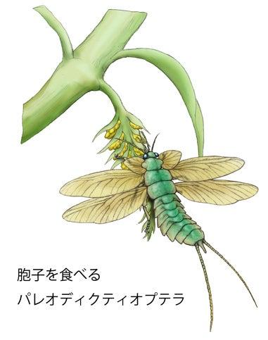 川崎悟司 オフィシャルブログ 古世界の住人 Powered by Ameba-胞子を食すパレオディクティオプテラ