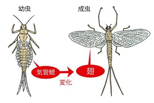 川崎悟司 オフィシャルブログ 古世界の住人 Powered by Ameba-カゲロウの幼虫と成虫
