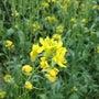 5月初旬の畑♪
