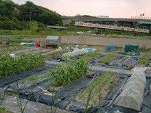 耕作放棄地をショベルで畑に開拓!週2日家庭菜園有機野菜栽培の記録 byウッチー-120528今日の農作業の出来栄え02