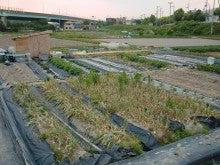 耕作放棄地をショベルで畑に開拓!週2日家庭菜園有機野菜栽培の記録 byウッチー-120528今日の農作業の出来栄え03