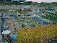 耕作放棄地をショベルで畑に開拓!週2日家庭菜園有機野菜栽培の記録 byウッチー-120528今日の農作業の出来栄え01