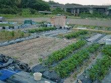 耕作放棄地をショベルで畑に開拓!週2日家庭菜園有機野菜栽培の記録 byウッチー-120528今日の農作業の出来栄え04