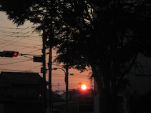 岐阜・本郷の並木通り-五月の夕日