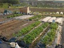 耕作放棄地をショベルで畑に開拓!週2日家庭菜園有機野菜栽培の記録 byウッチー-120529今日の農作業の出来栄え05