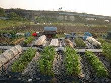 耕作放棄地をショベルで畑に開拓!週2日家庭菜園有機野菜栽培の記録 byウッチー-120529今日の農作業の出来栄え02
