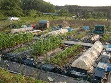 耕作放棄地をショベルで畑に開拓!週2日家庭菜園有機野菜栽培の記録 byウッチー-120529今日の農作業の出来栄え03