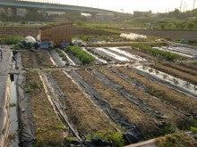 耕作放棄地をショベルで畑に開拓!週2日家庭菜園有機野菜栽培の記録 byウッチー-120529今日の農作業の出来栄え04