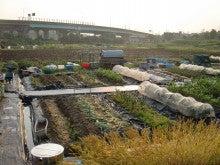 耕作放棄地をショベルで畑に開拓!週2日家庭菜園有機野菜栽培の記録 byウッチー-120529今日の農作業の出来栄え01