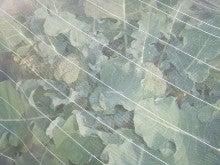 耕作放棄地をショベルで畑に開拓!週2日家庭菜園有機野菜栽培の記録 byウッチー-120528ブロッコリーハイツSP0124蒔0306定植初収穫02
