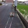 お散歩\(^o^)/の画像