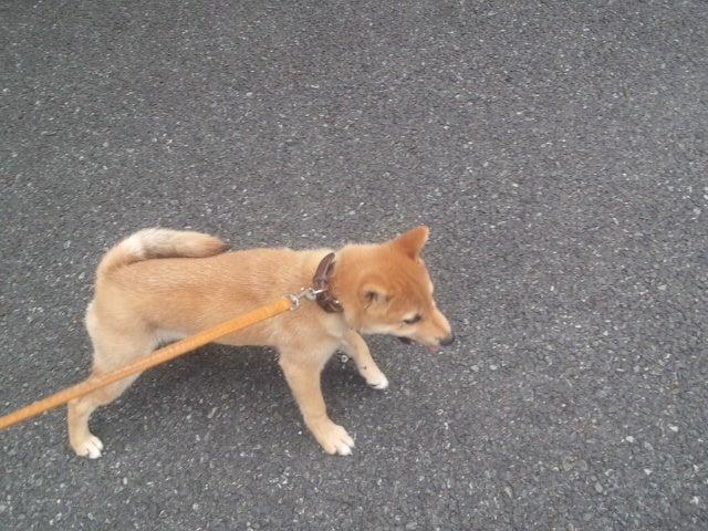 ペットの森ブログ-DCIM0436.JPG