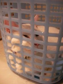ようこそ 猫キャバ へ-ナナ