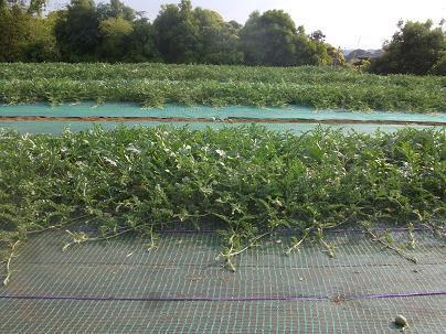 農業のトータルコーディネータ  イノウエ農商事のブログ-06022