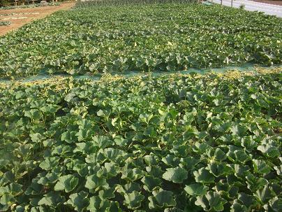 農業のトータルコーディネータ  イノウエ農商事のブログ-06023