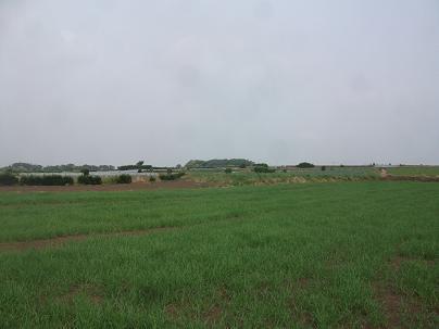 農業のトータルコーディネータ  イノウエ農商事のブログ-06021