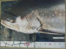 $西毛山魚会