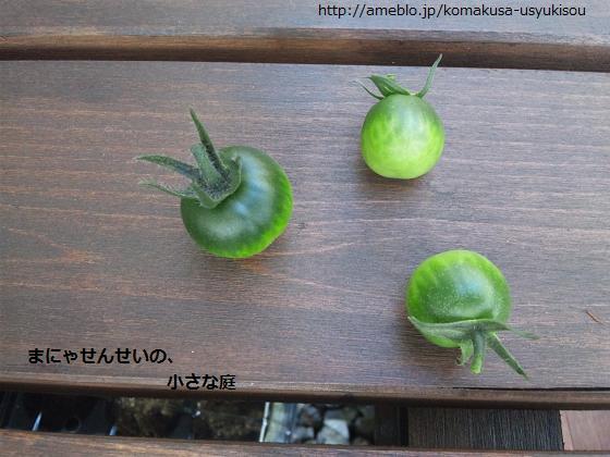 まにゃせんせいの、小さな庭-摘果ふたたび