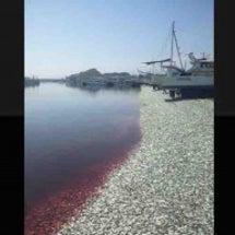 いすみ市大原漁港に大…