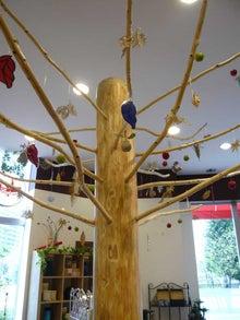 ARDILのGREENなお話-葉なし樹木