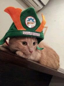 $佐賀の猫カフェコロンの癒しブログ-1338891378959.jpg