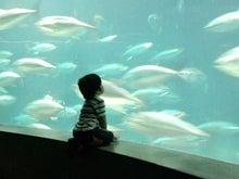 彩魚の、こぅたろ子育て●消しごむはん子●パンの日々-DSC_0104.jpg