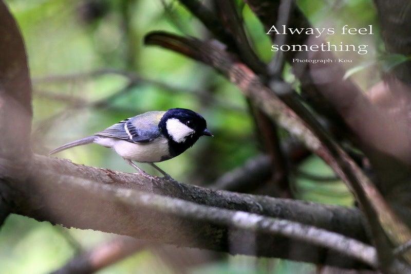Always feel something